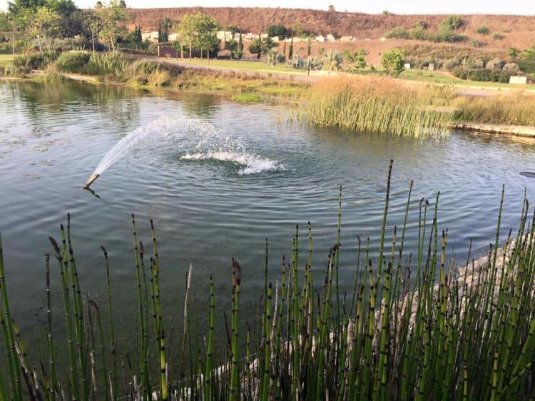 אגם בפארק אריאל שרון